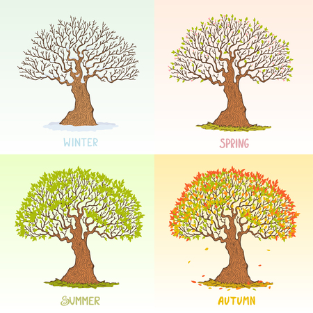 paintings: Beautiful big tree in different seasons. Vector illustration