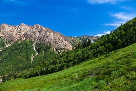 Sommerzeit in Little Cottenwood Canyon in der Wasatch Range der Rocky Mountains, Utah Standard-Bild