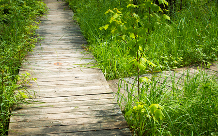 Two wooden paths lead to different directions. Stock Photo - 61843000