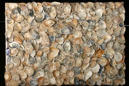 Sea shells. Coast. Beach