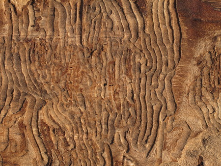 tree texture background pattern natural material, wood