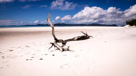 whitehaven beach: A tree trunk is sitting on white sand on a wide beach at Whitehaven beach, Whitsunday Island, QLD Australia. Stock Photo