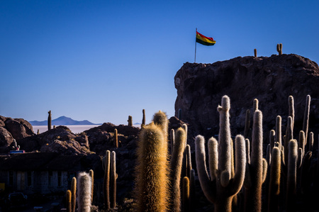 Sourrounded by the Salar de Uyuni salt lake the cactus island Incahuasi is impressive. A Bolivian flag is waving on the highest point of the island.