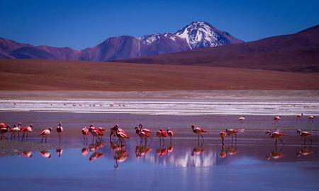 Snow peaked mountains reflect in a blue lagoon where flamingos stand - Eduardo Avaroa Andean Fauna National Reserve, BOLIVIA in September 2015 Stock Photo
