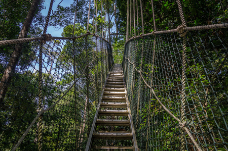 negara: Canopy bridge in Taman Negara national park, Malaysia Stock Photo