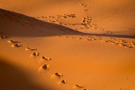 Footprints in the sand at the sahara desert, Merzouga, Morocco Imagens