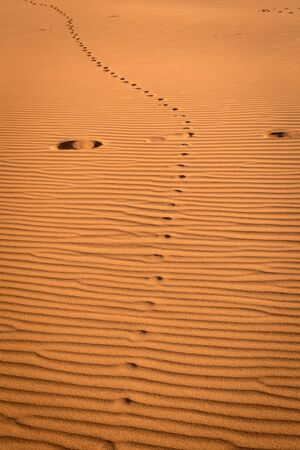 Footprints in the sand at the sahara desert, Merzouga, Morocco