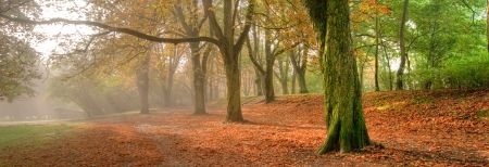 Herbstlandschaft Standard-Bild - 17871533