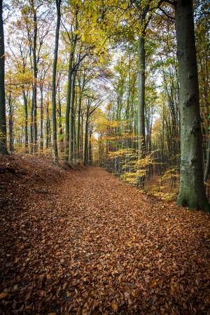 Pathway in den herbstlichen Wald Standard-Bild - 23445004