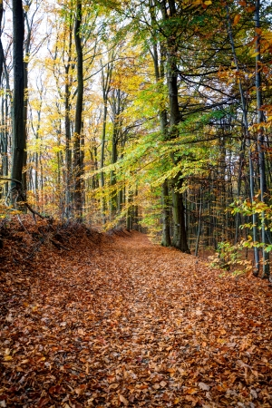 Eine einsame Straße in den Wald Standard-Bild - 23435576
