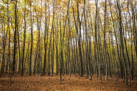 Herbst Wald Standard-Bild - 23739498