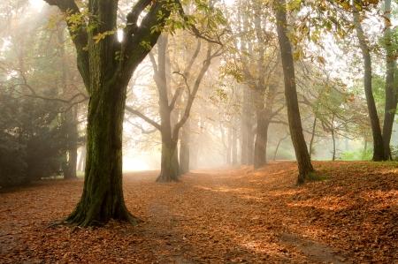 Bunte Blätter im Herbst Park Standard-Bild - 23770588