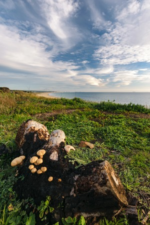A view over a beach at Tarifa with the Strait of Gibraltar and a trunk with mushrooms on it in the foreground.
