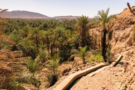 Panoramic view over oasis of date palms, Figuig, Morocco
