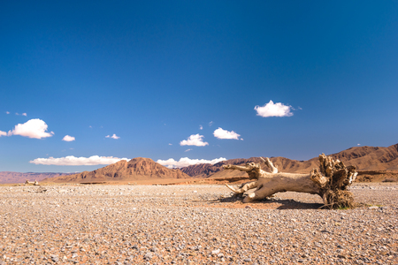 vastness: A stub or dead tree lying in a very dry stone desert in Morocco. Stock Photo