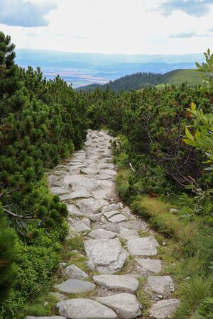 A path made of stones and a small pine tree in the forest. High Tatras, Slovakia.