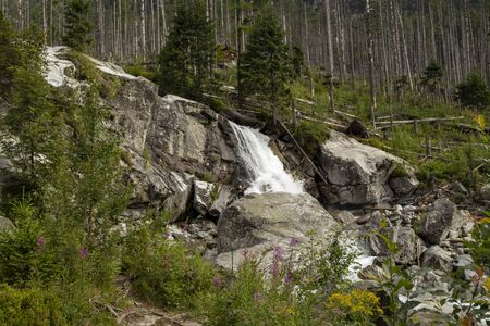 Mountain waterfall flowing over massive rocks. Blooming mountain flowers in the foreground. Broken trees in the background. High Tatras, Slovakia. Stockfoto