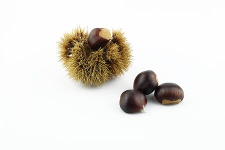 A handful of edible chestnuts separated on a white background. Isolated white background and autumn forest edible brown chestnuts. Chestnut in coat.