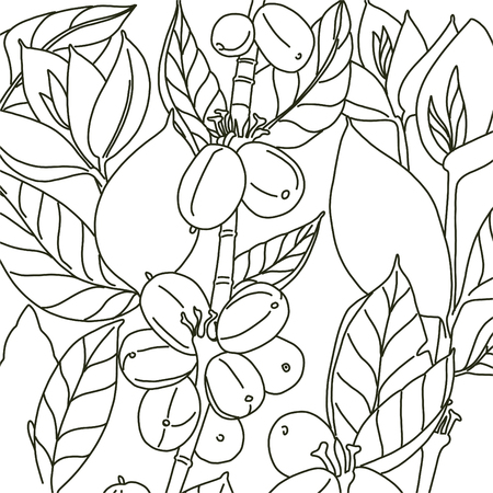 Background with floral design. Coffee beans and leaves. Black and white colors. White background