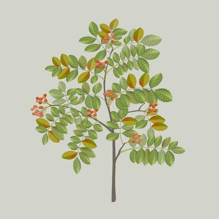 잎과 열매와 고추 나무 지점