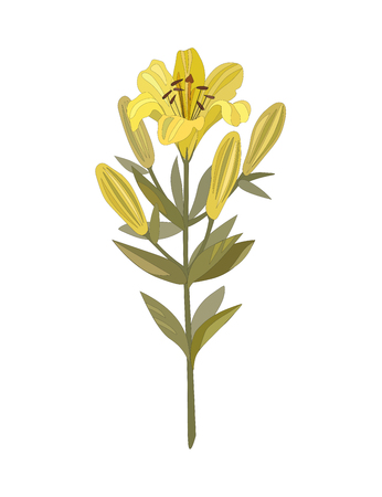 Vector illustration.  Bouquet of yellow lilies. isolated on white. Illustration
