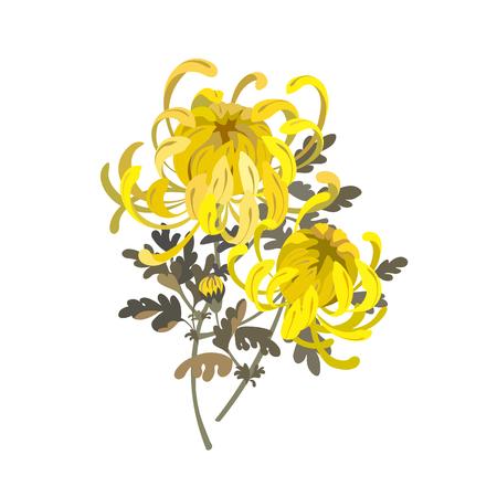 Chrysanthemum flowers. Floral bouquet design. Yellow chrysanthemum vector illustration isolated on white Ilustração