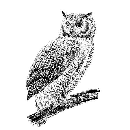 Owl on a branch. Engraving style. Black ink brush texture. Black and white. Vector Illustratie