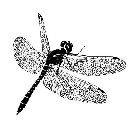 Dragonfly engraving style. Black and white vector illustration