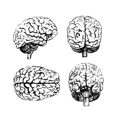 A set of brains in four angles made with a black ink brush.
