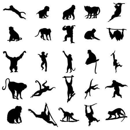 gorila: Conjunto de la silueta del mono y mono aislado en un fondo blanco Vectores