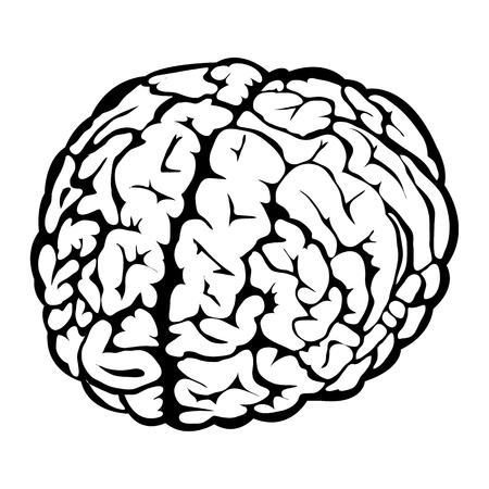 cerebro blanco y negro: Negro signo cerebro humano sobre un fondo blanco Vectores