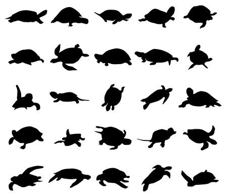 schildkroete: Turtle-Silhouetten-Satz isoliert auf weißem Hintergrund