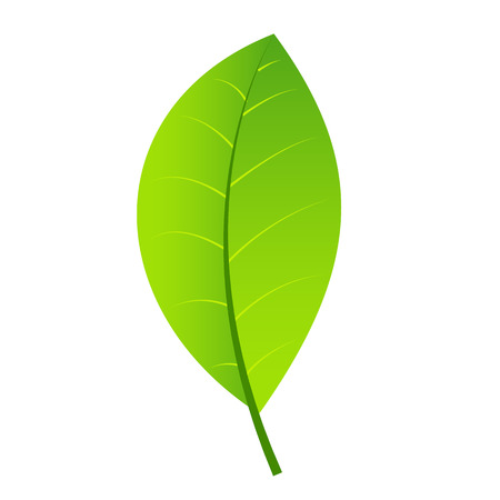 vegetate: Leaf green icon isolated on white background