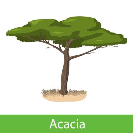silhoette: Acacia cartoon tree. Single illustration on a white background