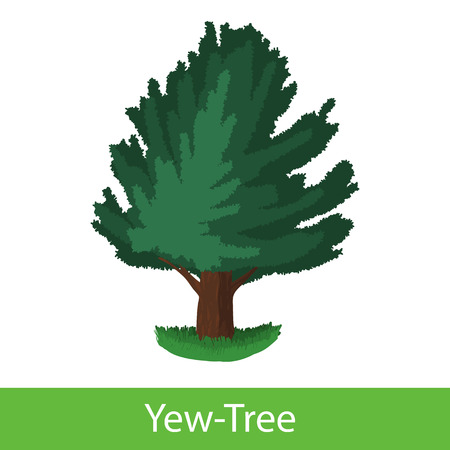 silhoette: Yew-Tree cartoon icon. Single illustration on a white background