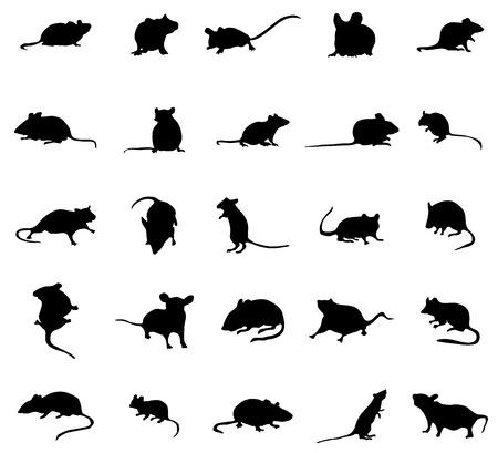 rata caricatura: siluetas de ratón conjunto aislado sobre fondo blanco