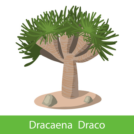 upturned: Dragon tree color icon. Single cartoon symbol on a white background