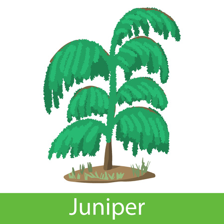 everlasting: Juniper cartoon icon. Single symbol on a white background