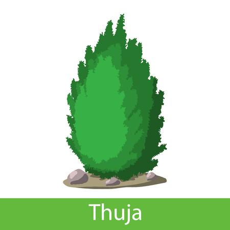 brushwood: Thuja icon. Single cartoon symbol on a white background Illustration