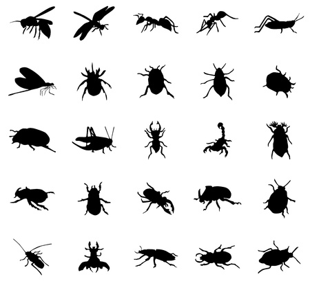 barbel: Beetles silhouettes set isolated on white background