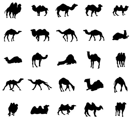 nomad: Camel silhouettes set isolated on white background