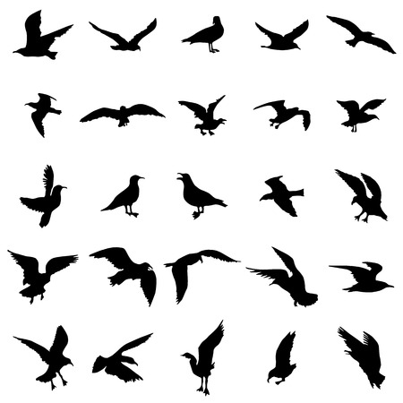 gull: Gull silhouettes set isolated on white background