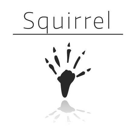 ison: Squirrel animal track with name and reflection on white background