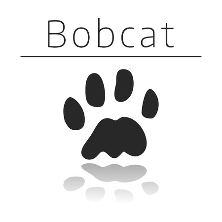 ison: Bobcat animal track with name and reflection on white background