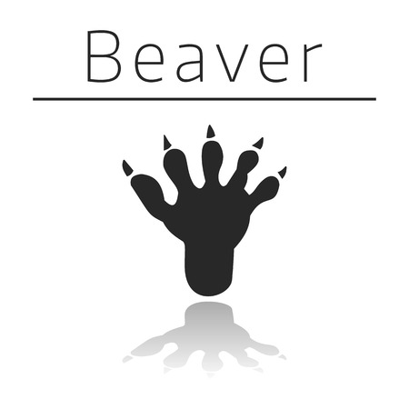 ison: Beaver animal track with name and reflection on white background