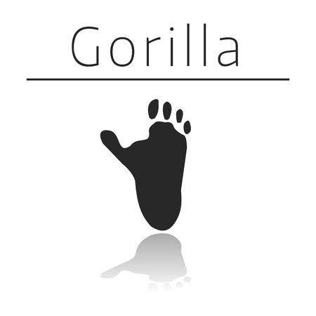 track pad: Gorilla animal track with name and reflection on white background Illustration