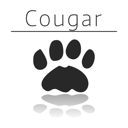 Cougar animal track with name and reflection on white background Illustration
