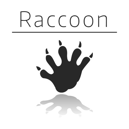 ison: Raccoon animal track with name and reflection on white background Illustration