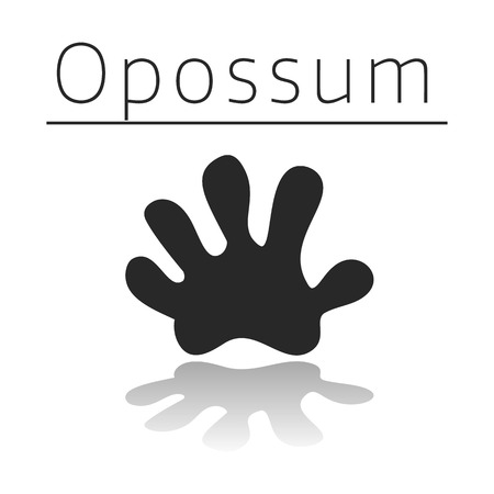 Opossum animal track with name and reflection on white background Illustration