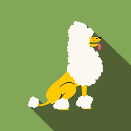 cute puppy: Circus poodle flat illustration on a green background Illustration